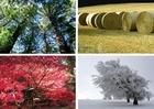 Photo les quatre saisons