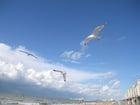 Photo mouettes à la plage 3
