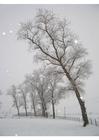 Photo neige - paysage enneigé