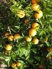 Photo oranges