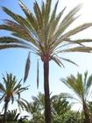 Photo palmiers