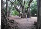 Photo Parc Puna