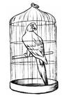 Coloriage perroquet en cage