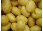 Photo pomme de terre