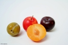 Photo prunes