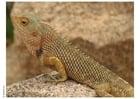 Photo reptile