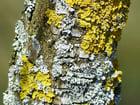 Photo tronc d'arbre avec de la mousse