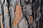 Photo tronc d'arbre