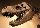 Photo tyrannosaurus rex