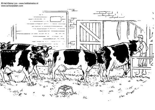 Dessin troupeau de vache - Dessin vaches ...